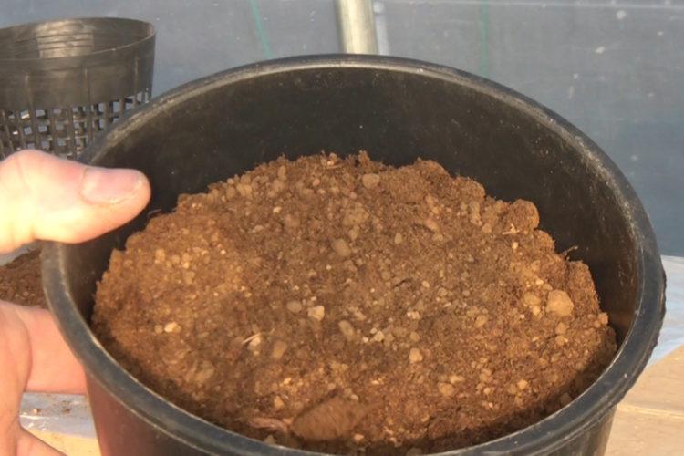 Vaso non forato con terreno acquatiche