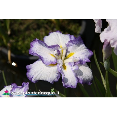 "Iris Ensata ""Cascade Spring Dress"""